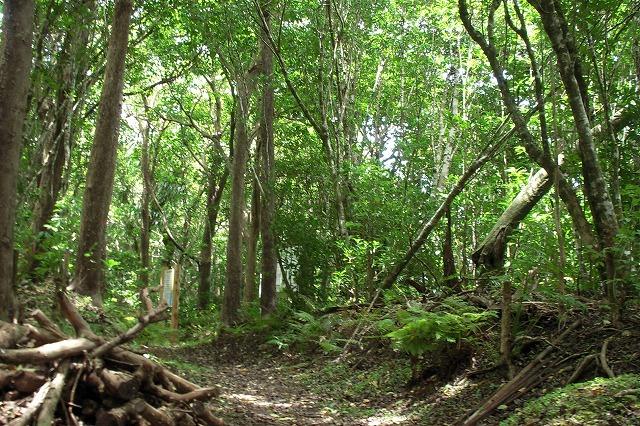 母島のジャングル