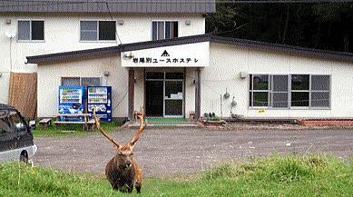 岩尾別ユースホステル