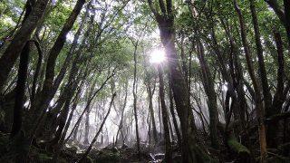 屋久島・縄文杉に女子一人で登る方法【その4島めぐり編】