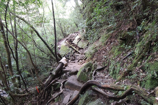 屋久島登山道