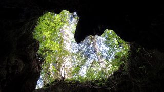 屋久島・縄文杉に女子一人で登る方法【その3登山編】