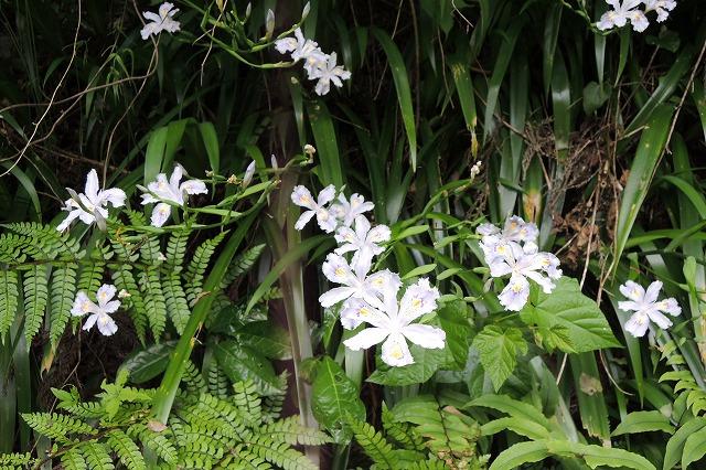 高尾山お花